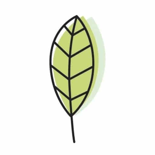cropped-SP-Logo_leaf-favicon-1.jpg